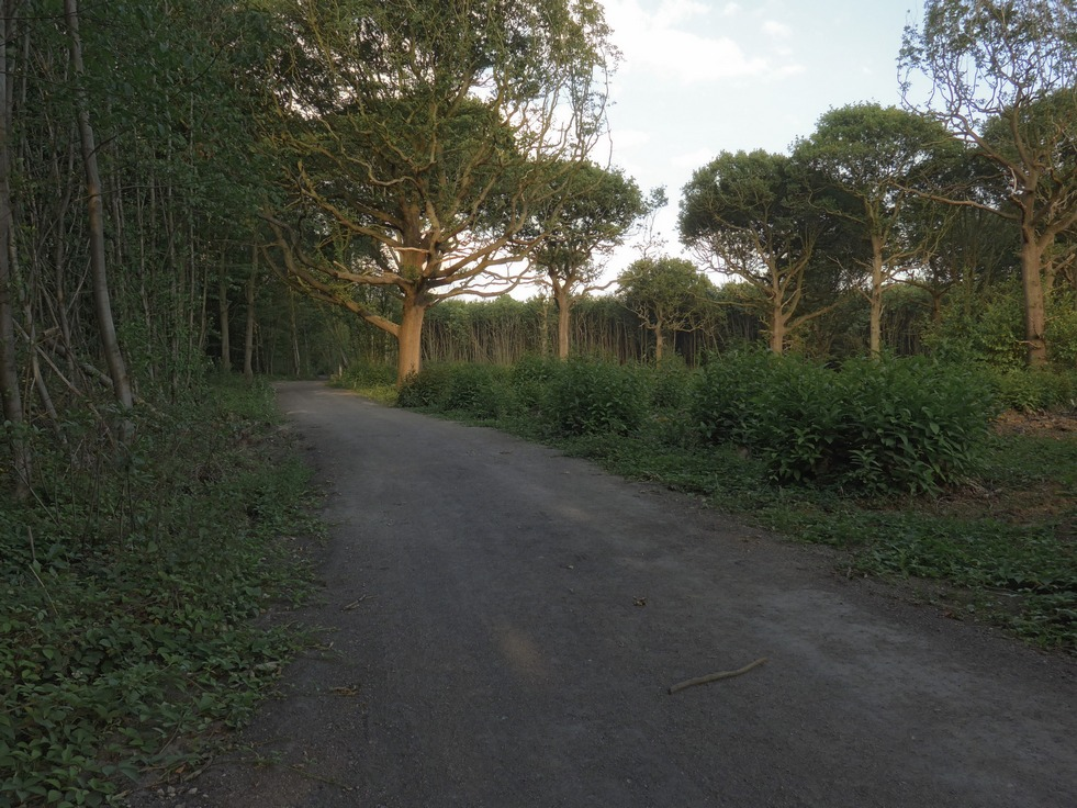 woods2-r