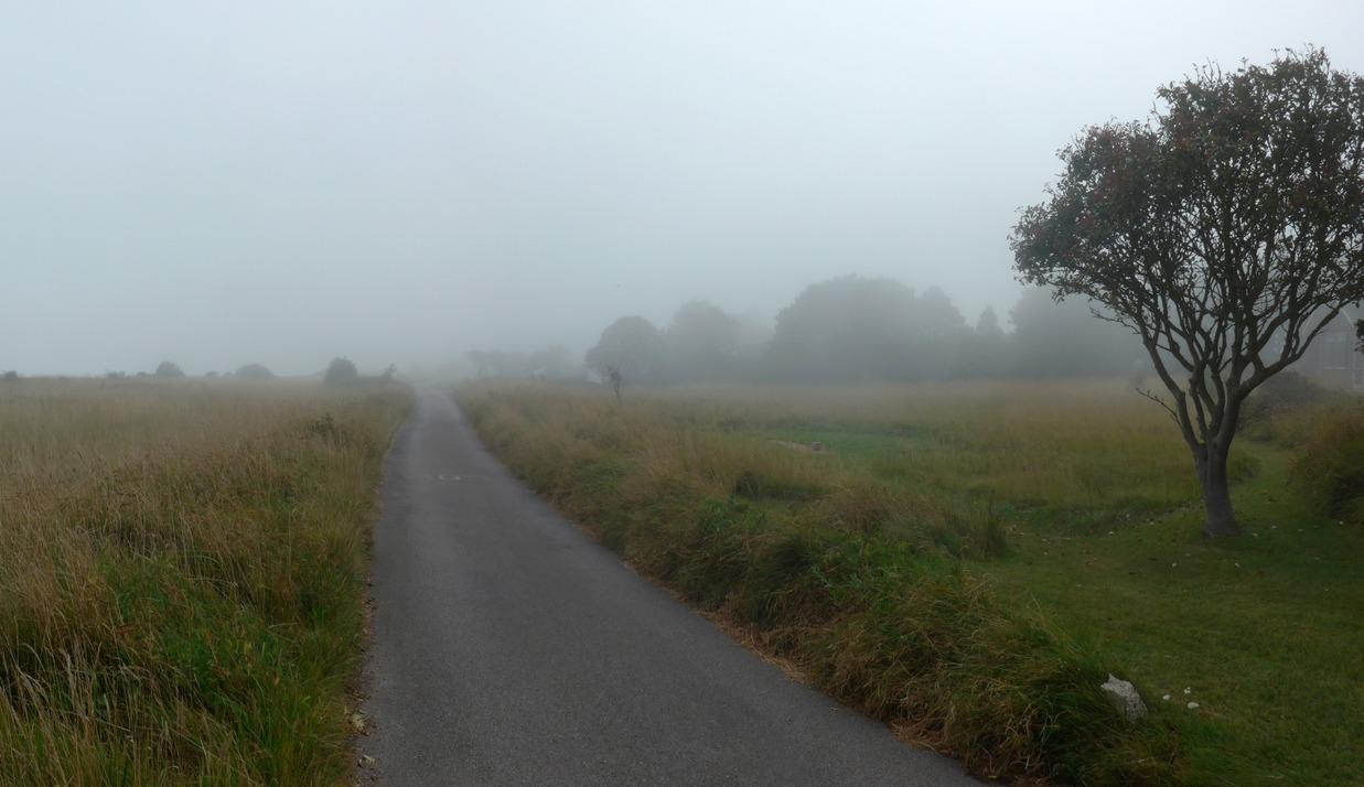 Misty Tree -r
