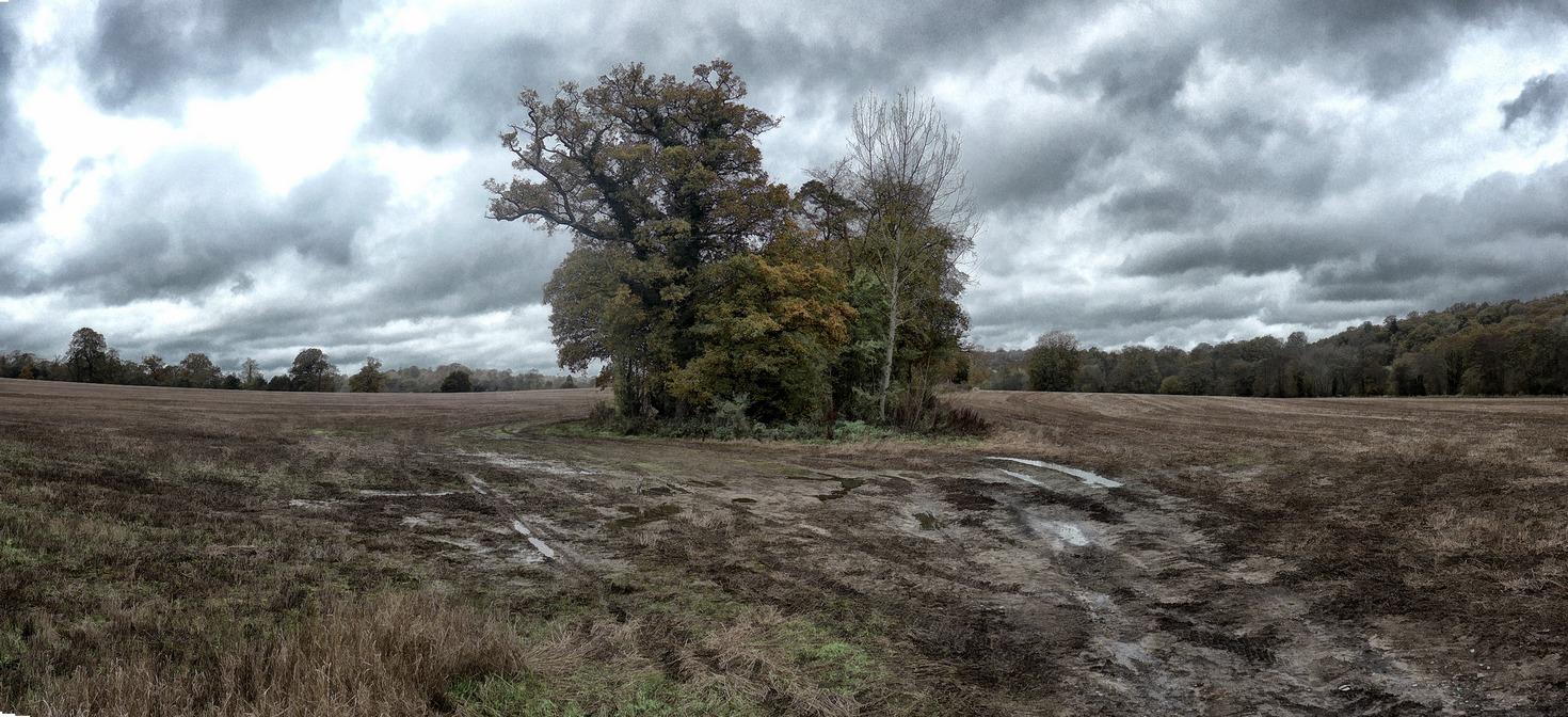 Muddy Field -r