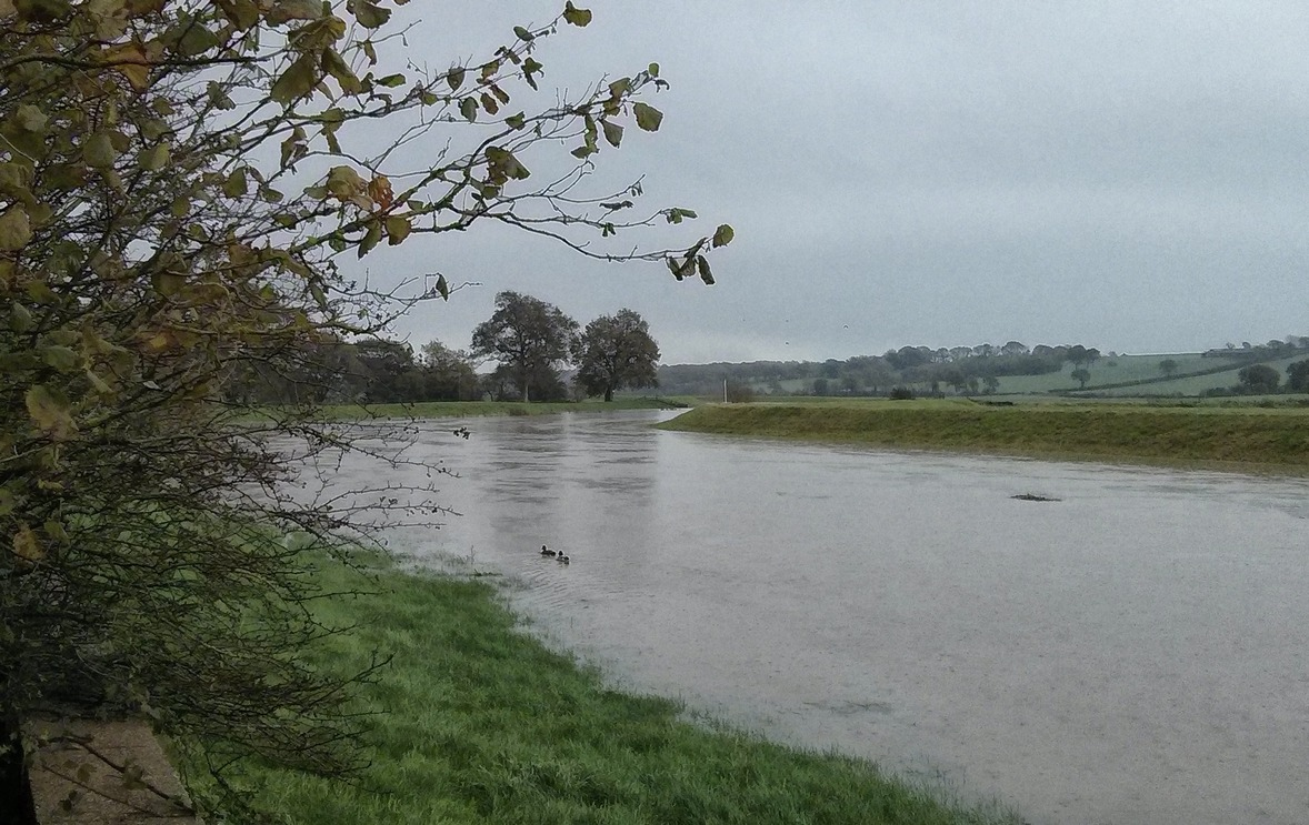 Nice weather for ducks! The River Rother was overflowing!
