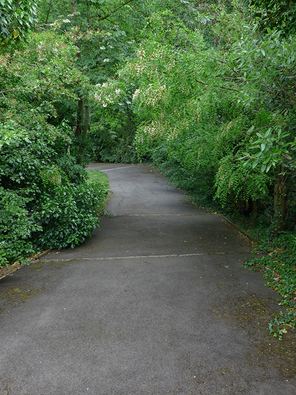Maryon Park Steps Down
