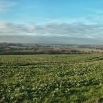 View towards Wateringbury from Kenward Road