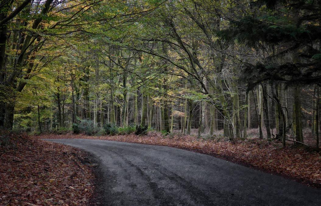 woods2 -r